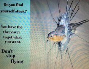 Bird window never give up